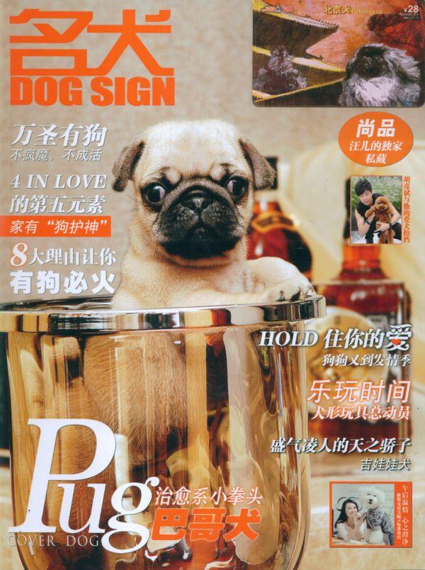 狗狗杂志背景素材