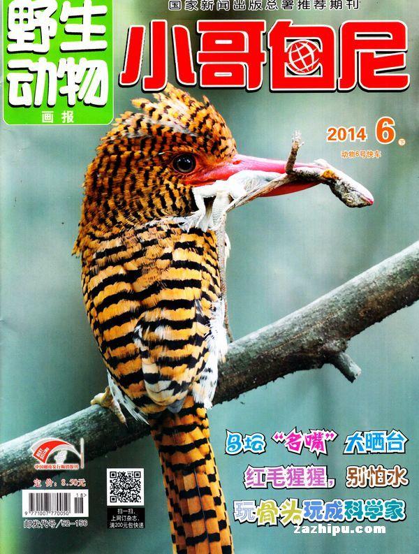 小哥白尼野生动物画报2014年6月期-小哥白尼野生动物画报杂志封面