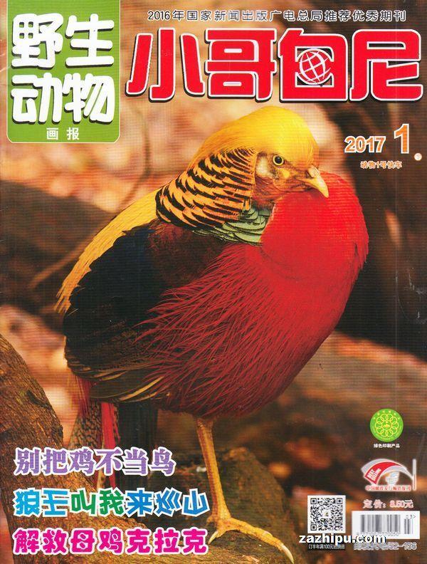 小哥白尼野生动物画报2011年1月期-小哥白尼野生动物画报杂志封面