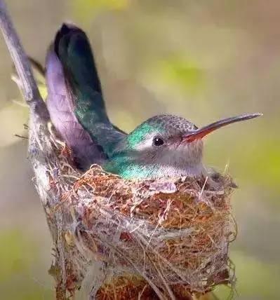 """""""雨天的旋律""""中,有一首动动儿歌《快乐的小鸟》,你跟着一起做了吗?"""