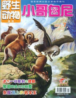 小哥白尼野生动物画报2012年7月期封面图片-杂志铺