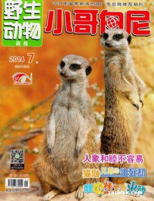 小哥白尼野生动物画报2011年7月期封面图片-杂志铺.