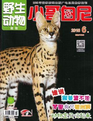 小哥白尼野生动物画报杂志封面秀-图片-杂志铺