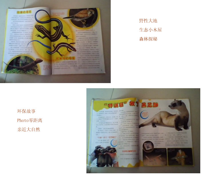 《小哥白尼野生动物画报》|